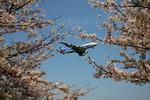 tsubameさんが、福岡空港で撮影した全日空 747-481(D)の航空フォト(写真)