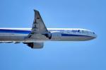 たこまるさんが、羽田空港で撮影した全日空 777-381/ERの航空フォト(写真)