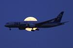 kingmengraiさんが、羽田空港で撮影した全日空 787-8 Dreamlinerの航空フォト(写真)