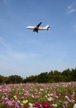 todotaさんが、成田国際空港で撮影したバニラエア A320-211の航空フォト(写真)