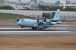 amagoさんが、伊丹空港で撮影した航空自衛隊 C-130H Herculesの航空フォト(写真)