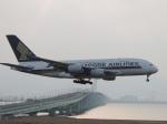 いもつさんが、関西国際空港で撮影したシンガポール航空 A380-841の航空フォト(写真)