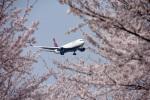 なないろさんが、成田国際空港で撮影したデルタ航空 767-332/ERの航空フォト(写真)