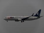 aquaさんが、北京首都国際空港で撮影した山東航空 737-89Lの航空フォト(写真)
