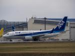 ごんたまさんが、成田国際空港で撮影した全日空 737-781/ERの航空フォト(写真)