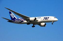まいけるさんが、スワンナプーム国際空港で撮影した全日空 787-881の航空フォト(写真)