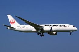 JA946さんが、成田国際空港で撮影した日本航空 787-846の航空フォト(写真)