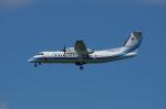 咲良さんが、函館空港で撮影した海上保安庁 DHC-8-315 Dash 8の航空フォト(写真)