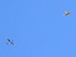 Mame @ TYOさんが、札幌飛行場で撮影した滝川スカイスポーツ振興協会 DR-400-180R Remorqueurの航空フォト(写真)