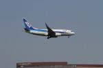 クルーズさんが、成田国際空港で撮影した全日空 737-781の航空フォト(写真)