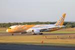 hidetsuguさんが、新千歳空港で撮影したスクート 787-8 Dreamlinerの航空フォト(写真)