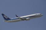 とらとらさんが、羽田空港で撮影した全日空 737-881の航空フォト(写真)