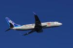 COLT VerRさんが、岡山空港で撮影した全日空 737-881の航空フォト(写真)