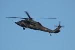 TRdenさんが、名古屋飛行場で撮影した航空自衛隊 UH-60Jの航空フォト(写真)