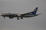 チャッピー・シミズさんが、成田国際空港で撮影した全日空 787-8 Dreamlinerの航空フォト(写真)