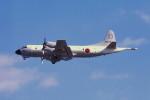動物村猫君さんが、大分空港で撮影した海上自衛隊 P-3Cの航空フォト(写真)