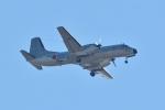 りゅうさんさんが、調布飛行場で撮影した航空自衛隊 YS-11A-402EAの航空フォト(写真)