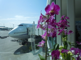 Koenig117さんが、那覇空港で撮影した全日空 747-481(D)の航空フォト(写真)