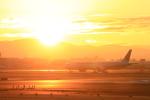 LeeFuuさんが、伊丹空港で撮影した日本航空 777-346/ERの航空フォト(写真)