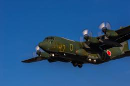 ヶローさんが、岐阜基地で撮影した航空自衛隊 C-130H Herculesの航空フォト(写真)