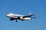 saoya_saodakeさんが、成田国際空港で撮影した全日空 A320-211の航空フォト(写真)