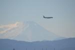 hirokongさんが、横田基地で撮影したオムニエアインターナショナル 767-3Q8/ERの航空フォト(写真)