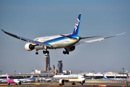 パンダさんが、成田国際空港で撮影した全日空 787-9の航空フォト(写真)