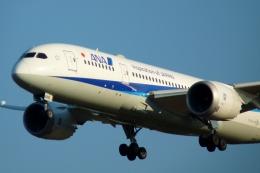 Bluewingさんが、成田国際空港で撮影した全日空 787-881の航空フォト(写真)