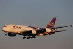 中トロ・バジーナさんが、成田国際空港で撮影したタイ国際航空 A380-841の航空フォト(写真)