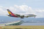さっしんさんが、関西国際空港で撮影したアシアナ航空 A380-841の航空フォト(写真)