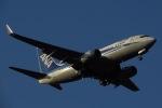 じゃがさんが、成田国際空港で撮影した全日空 737-781の航空フォト(写真)