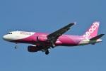 camelliaさんが、成田国際空港で撮影したピーチ A320-214の航空フォト(写真)