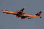 ファインディングさんが、羽田空港で撮影したルフトハンザドイツ航空 A340-642の航空フォト(写真)