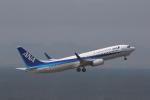 MA~RUさんが、中部国際空港で撮影した全日空 737-881の航空フォト(写真)