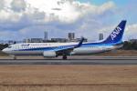 md11jbirdさんが、伊丹空港で撮影した全日空 737-881の航空フォト(写真)