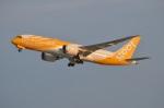 amagoさんが、関西国際空港で撮影したスクート 787-8 Dreamlinerの航空フォト(写真)