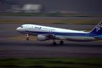 なまくら はげるさんが、羽田空港で撮影した全日空 A320-211の航空フォト(写真)