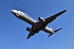 うめたろうさんが、伊丹空港で撮影した全日空 737-881の航空フォト(写真)