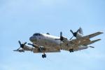 Takeshi90ssさんが、厚木飛行場で撮影した海上自衛隊 P-3Cの航空フォト(写真)