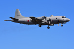 はるかのパパさんが、厚木飛行場で撮影した海上自衛隊 P-3Cの航空フォト(写真)