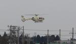raichanさんが、成田国際空港で撮影した法人所有 EC135P1の航空フォト(写真)