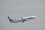 熊五郎~さんが、羽田空港で撮影した全日空 737-881の航空フォト(写真)