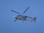パピヨンさんが、東京ヘリポートで撮影したオールニッポンヘリコプター AS365N3 Dauphin 2の航空フォト(写真)