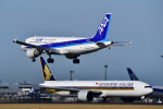 パンダさんが、成田国際空港で撮影した全日空 A320-211の航空フォト(写真)