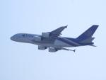 ken1☆MYJさんが、香港国際空港で撮影したタイ国際航空 A380-841の航空フォト(写真)