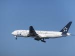 パピヨンさんが、羽田空港で撮影した全日空 777-281の航空フォト(写真)