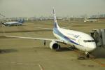 チェリーさんが、羽田空港で撮影した全日空 737-881の航空フォト(写真)