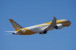 神宮寺ももさんが、成田国際空港で撮影したスクート 787-8 Dreamlinerの航空フォト(写真)