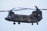 もっはさんが、木更津飛行場で撮影した陸上自衛隊 CH-47JAの航空フォト(写真)