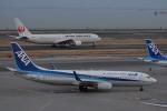 ぬま_FJHさんが、羽田空港で撮影した全日空 737-881の航空フォト(写真)